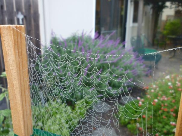 86697-webwsalvias10-2012