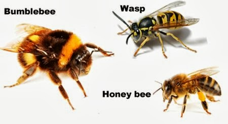 bees vs. wasps | Gladsome Lights