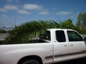 palms on truck 14