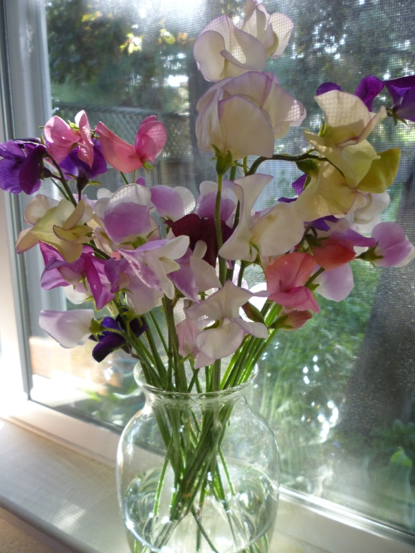 sweet peas first bouqet 4-29-14