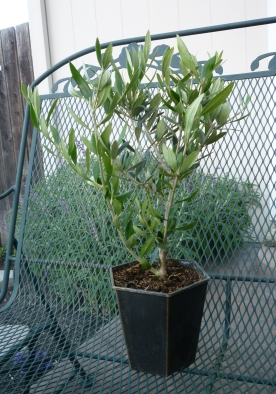 new olive 6-14