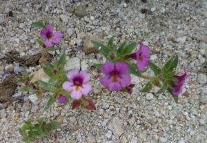 P1100294 flower crp
