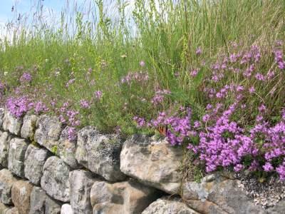 Hadrian flower-grass