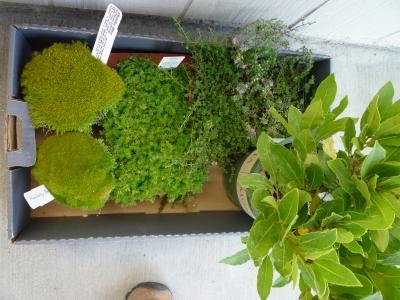 P1110679 plants