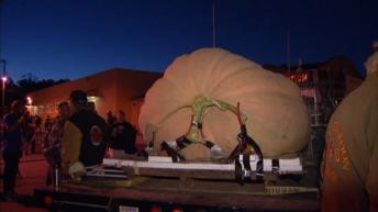pumpkin 1 ton + Half Moon Bay 14