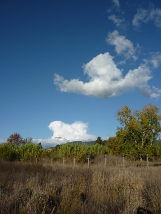 P1110737 Nov 1 14 sky