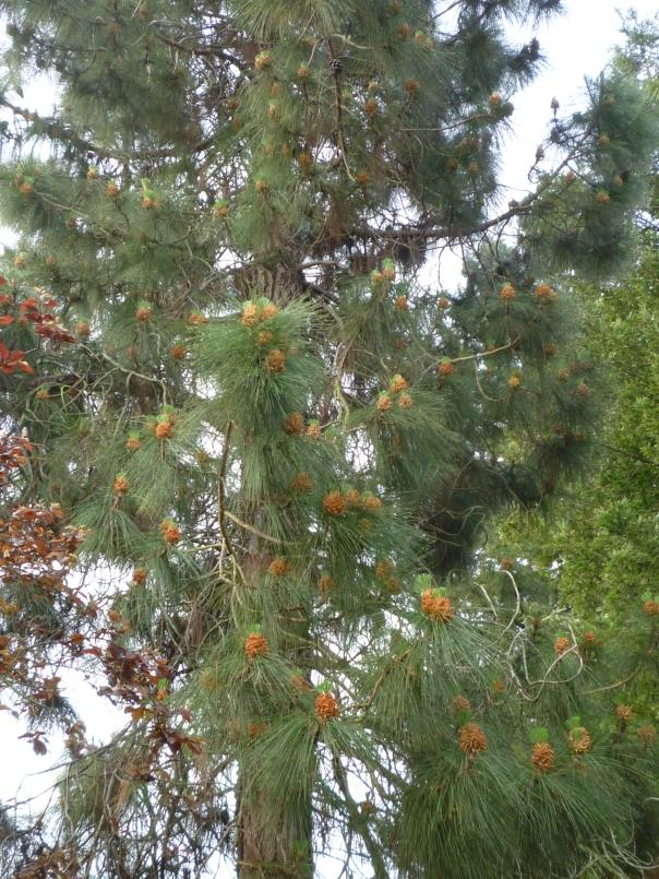 P1120548 cones