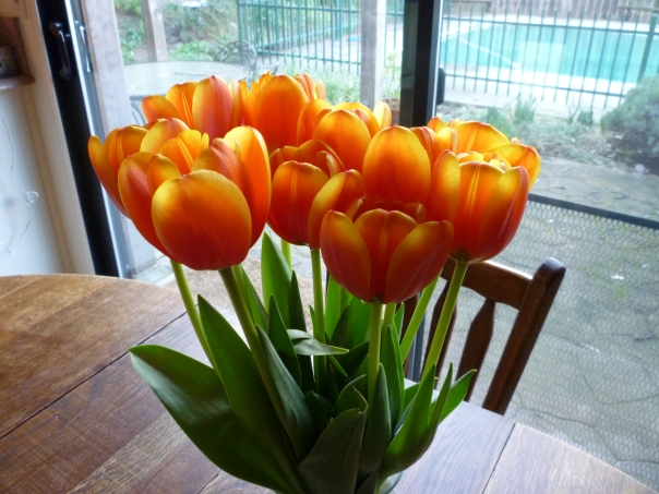 tulips from Kate 2015