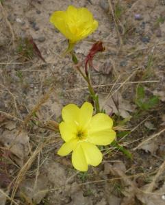 Fvl 2 flowers 15