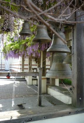 GL bells wisteria crp 4-18-15