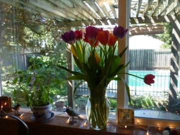 symp tulips