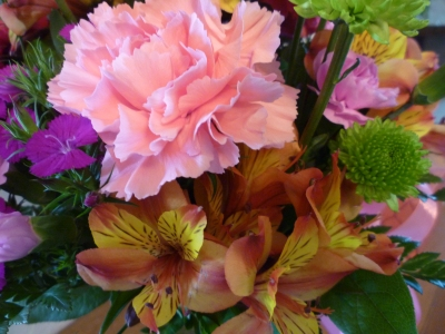 symp w carnation