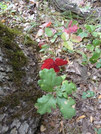 fb poison oak