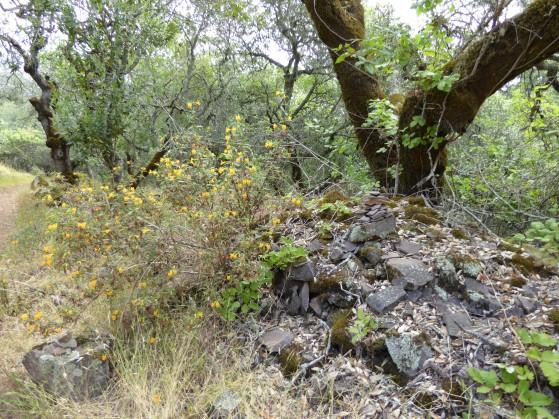 gl sticky monkey rocks tree Annadel