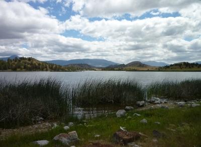 Trout Lake reeds 5-7-15