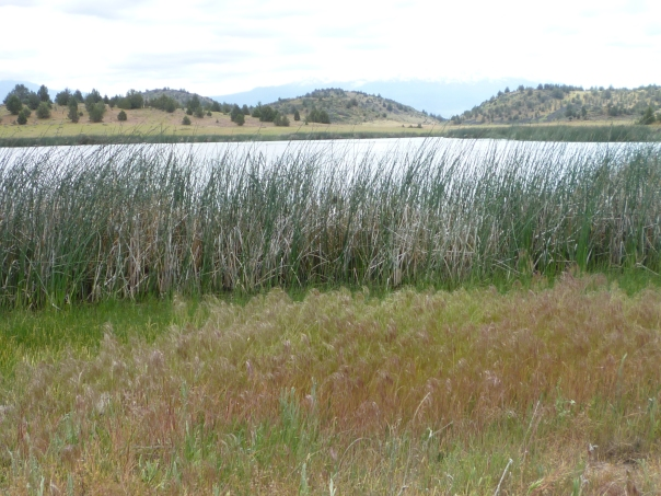 Trout Lake reeds & layers 5-15