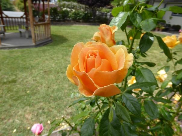orange rose church May 15