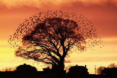 tree-flock-birds_David Biggs