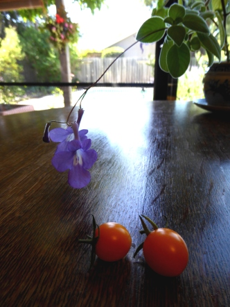 P1000581 cape violet & Sunsugar tomatoes