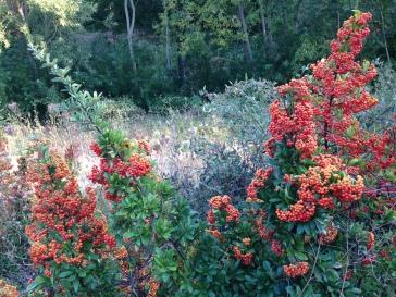 IMG_0553 berries