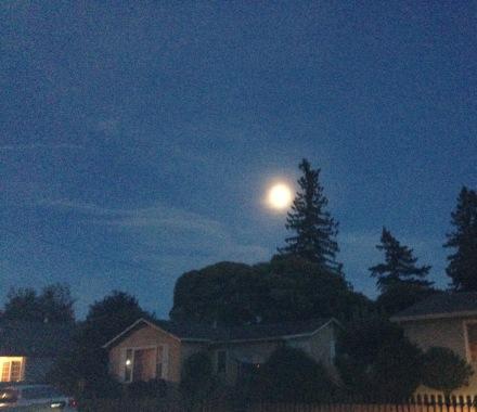 IMG_0606 moon crp