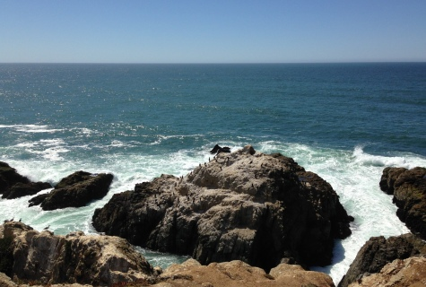 GL cormorant rock Bodega Head
