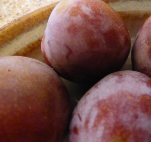 GL 10 P1020119 plums EH