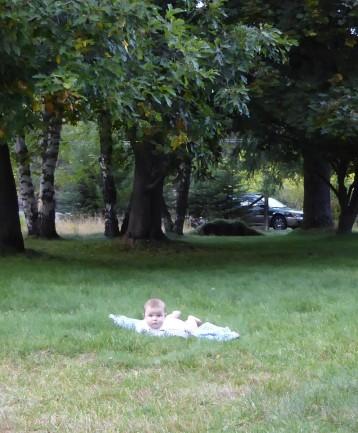 Jamie lawn trees crp