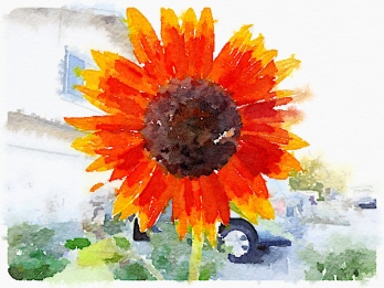 "Waterlogue 1.1.4 (1.1.4) Preset Style = Natural Format = 6"" (Medium) Format Margin = Small Format Border = Sm. Rounded Drawing = #2 Pencil Drawing Weight = Medium Drawing Detail = Medium Paint = Natural Paint Lightness = Normal Paint Intensity = Normal Water = Tap Water Water Edges = Medium Water Bleed = Average Brush = Natural Detail Brush Focus = Everything Brush Spacing = Narrow Paper = Watercolor Paper Texture = Medium Paper Shading = Light Options Faces = Enhance Faces"