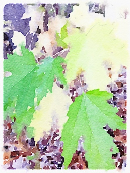 Waterlogue-2015-11-08-19-59-19 leaves