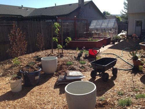 p- garden with olive pots pre-plant