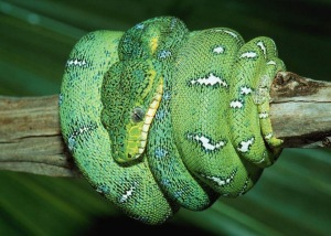 free-green-snake-wallpaper-hd-wallpaper