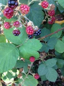 IMG_2698 berries