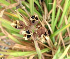 gl IMG_3001 seeds