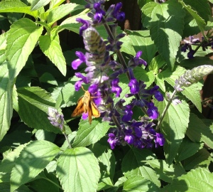 gl pollinator iphone 3049