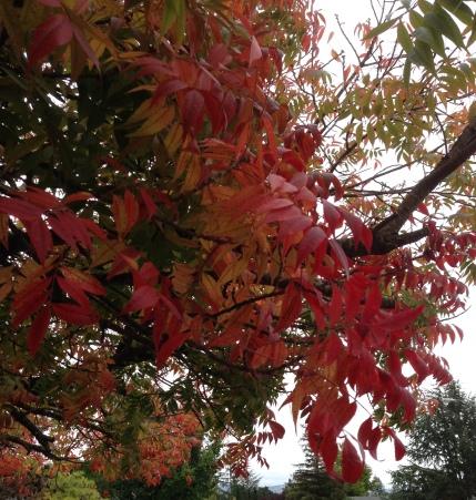 gl-2016-10-24-tree-on-corner