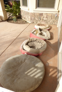 glt-dog-beds
