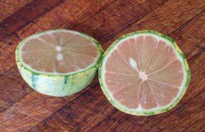 glt-lemon