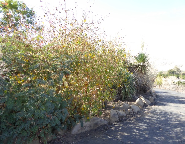 glt-prp-delta-sunflower-driveway