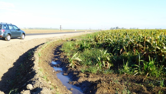 glt-sorghum-silage-10-16-central-valley