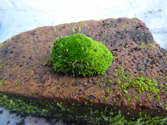 garden-p1060568-moss