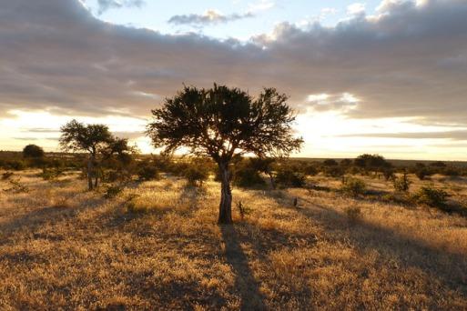 gl-tuli-safari-landscape