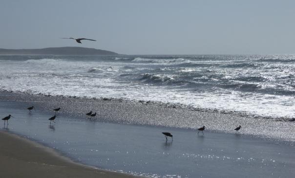sandpipers sparkle sea sand